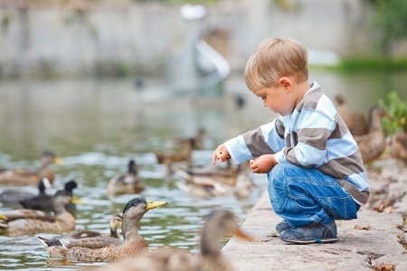 children pond: Cute little boy feeding ducks