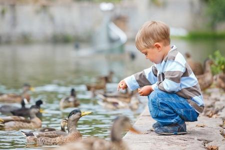 animals feeding: Cute little boy feeding ducks