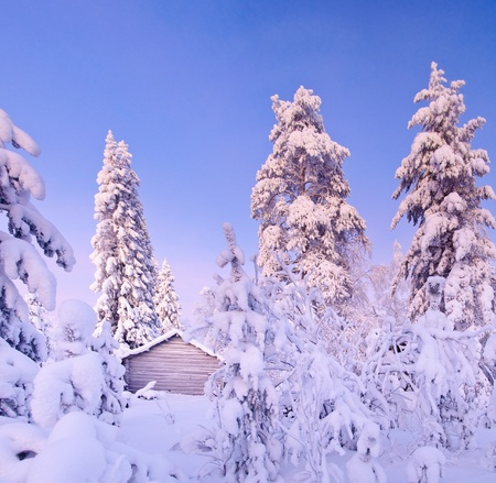 Winter fairy snow forest with pine trees photo
