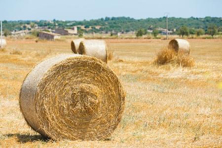 Yellow haystack photo