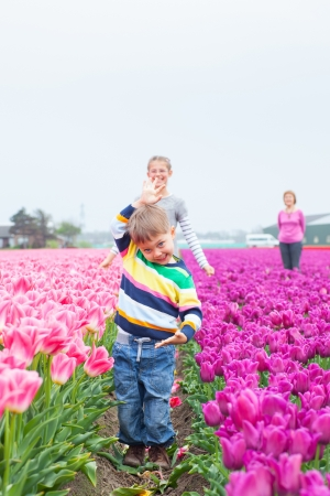 Boy with family in the purple tulips field Stock Photo - 13920661