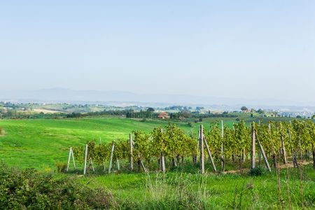 montepulciano: Vineyard near Montepulciano, Italy Stock Photo