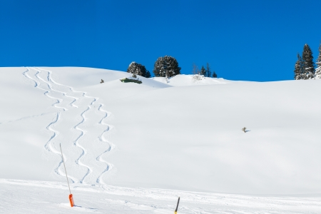 Traces left in powder snow by skiers, boarders. photo