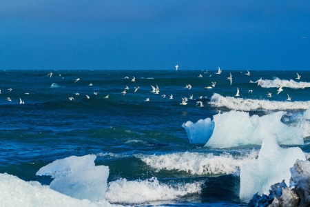 not full: Beautiful beach in the South of Iceland is full of icebergs from glaciers not far away