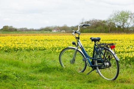 オランダの花のフィールドにオランダから自転車 写真素材
