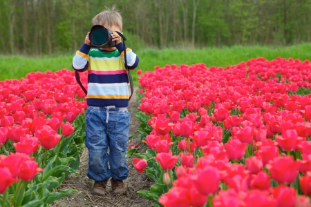 Cute little boy is taking pictures in field with tulips in Holland Stock Photo - 18871843