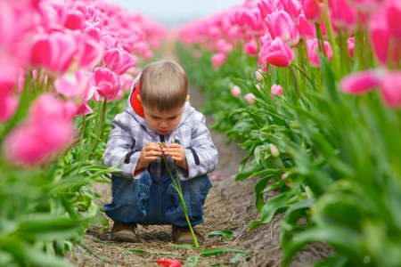 Cute Boy between of the purple tulips field photo