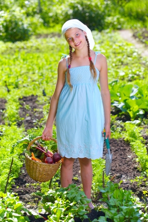 Vegetable garden - little gardener with a basket of organic carrots and beets photo