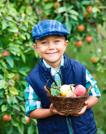 Harvesting apples  Cute little boy helping in the garden and picking apples in the basket  Banque d'images