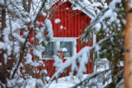 old barn in winter: Red wooden Finnish house in winter forest covered with snow Stock Photo