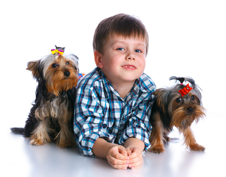 Boy with his Yorkshire terriers Stock Photo