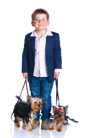 schooler: Boy with his Yorkshire terriers Stock Photo