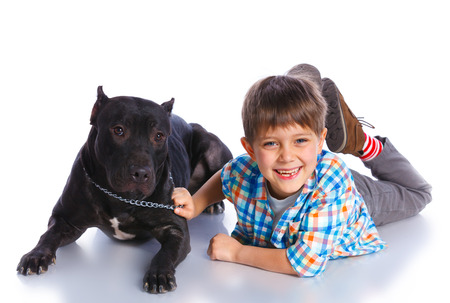 black and white pit bull: Boy with his Pit Bull Terrier