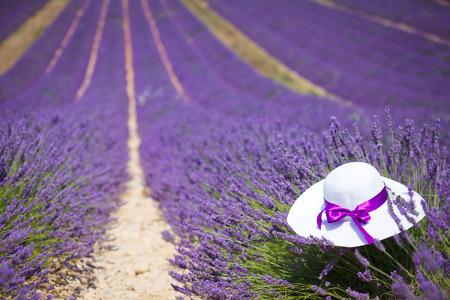 lavanda: Lavanda fields with white hat in Provence near Valensole. France
