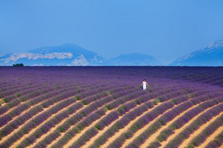 flower fields: Lavanda fields of the French Provence near Valensole