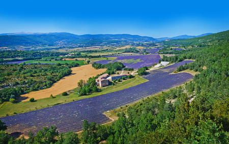 lavanda: Provencal landscape. Lavanda fields of the French Provence near Valensole. Panorama Stock Photo