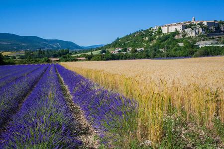 lavanda: Provencal landscape. Lavanda fields of the French Provence near Valensole