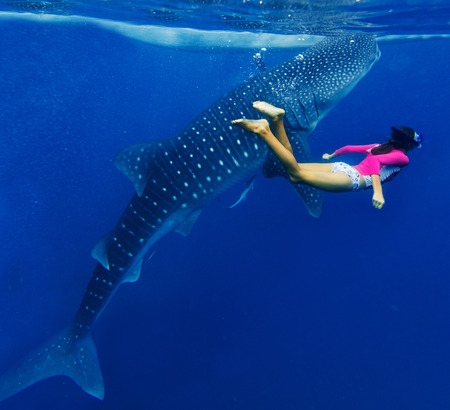 Young girl snorkeling with whale shark in the sea, Philippines