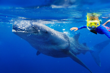 Cute boy snorkeling with whale shark in the sea, Philippines