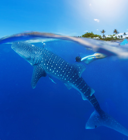 Young woman snorkeling with whale shark in the sea, Philippines