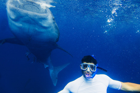 wide  wet: Young man snorkeling with whale shark in the sea, Philippines Stock Photo