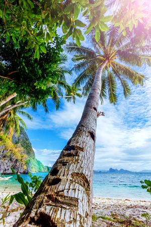 Palm and boat on the tropical beach in the Palawan Island in the Philippines.