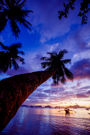 Sunset with palm and boat in the Palawan Island in the Philippines. Stock Photo