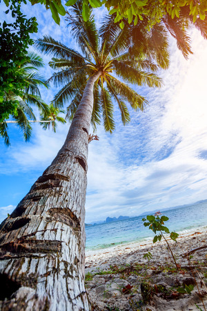 View of nice tropical beach with palms Stock Photo