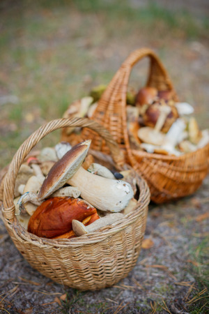 Baskets full of various kinds of mushrooms in a forest