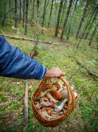 Basket full of various kinds of mushrooms in a forest Stock Photo