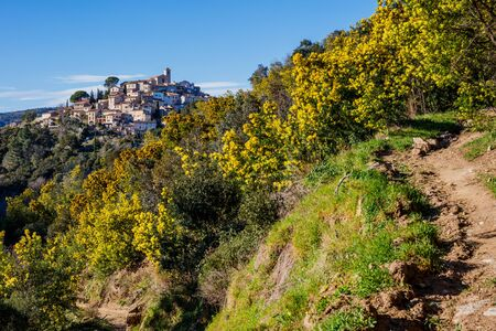 Panoramic view of the village Bormes-les-Mimosas. Mimosa trees in bloom in the foreground.