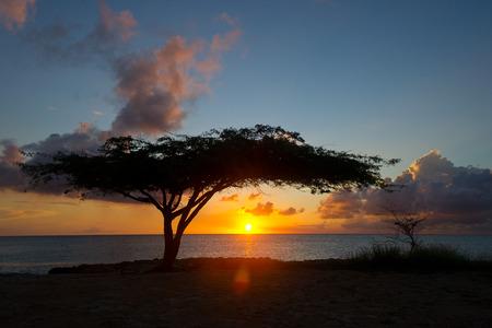 Tree at sunset in Aruba
