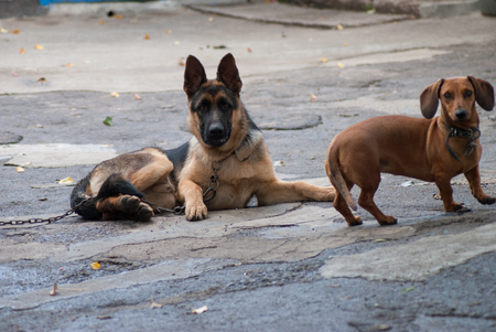Two dogs are friends and play together