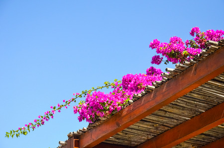 Wonderful flowers found in Greece on the island Stock Photo