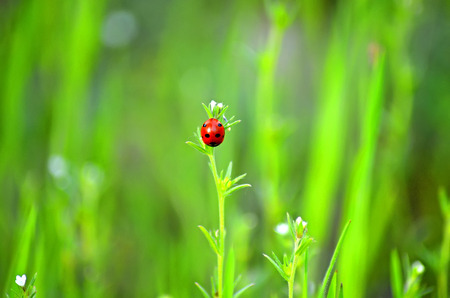 ladybug climbs on top of a blade of grass for the flight Zdjęcie Seryjne
