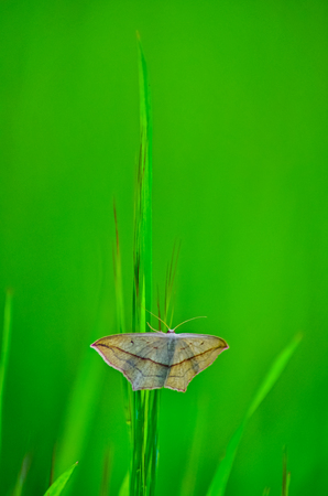 Butterfly froze motionless on a green blade of grass.