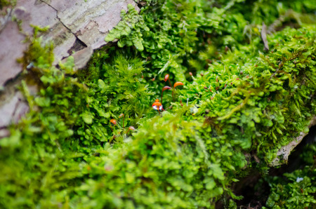 Thick green moss settled on a tree trunk. Forest on a tree trunk. Stock Photo