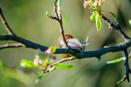 On a farm, snails creep along fruit trees.