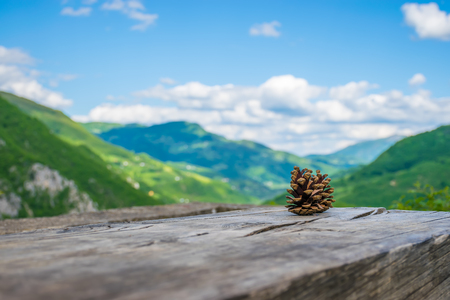 Two pine cones lie on a log among the mountains. Stok Fotoğraf