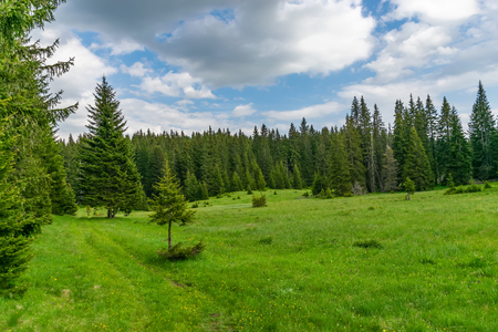 A picturesque calm meadow in a forest among the high massive mountains.