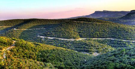 Artificial scrubland in Gard, France Reklamní fotografie