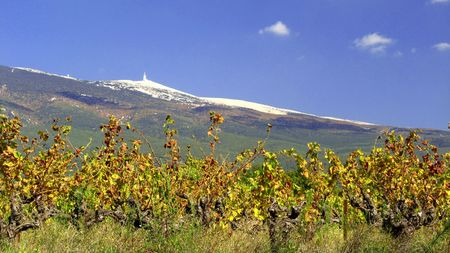 Vineyard next to Mont Ventoux