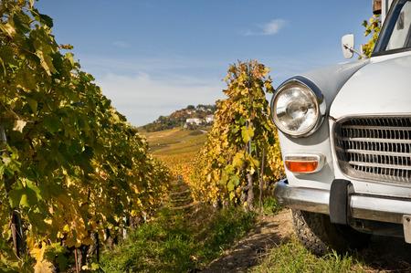 Lavaux vineyard Reklamní fotografie