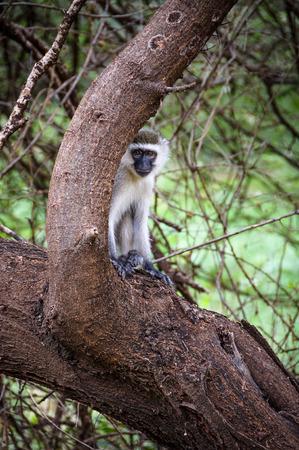 Monkey hiding behind a tree