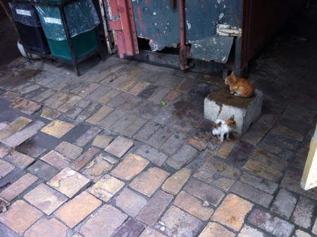 seem: These two kittens seem so lost.