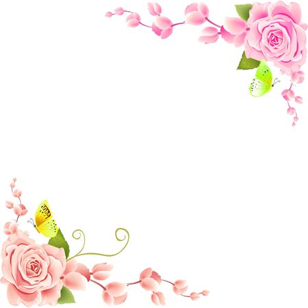 pink roses: Rose on White Background