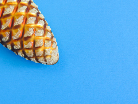 Christmas toy. Pine Cone on blue background