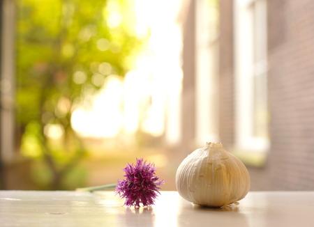 ajo: ajo blanco con la flor púrpura en fondo suave