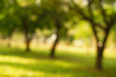 blur green tree in the garden background
