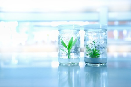 small green plant tissue culture glass bottles  in biotechnology science laboratory background